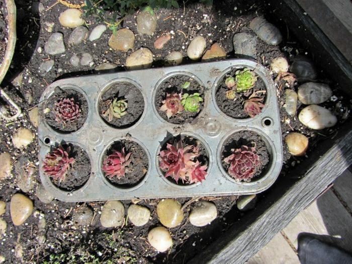 upcycling ideen kuechenutensilien aus alt macht neu Coole Bastelideen DIY bastelideen alte küchenkrams muffin form stecklinge
