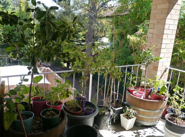 balkon gestalten kleiner garten passende balkonpflanzen
