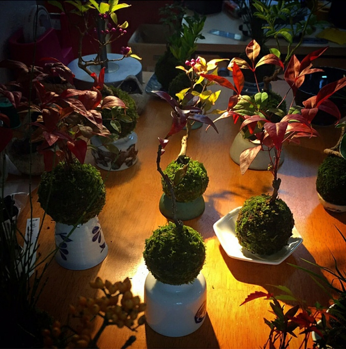 bonsai baum air japanisches porzellan schalen traditionell
