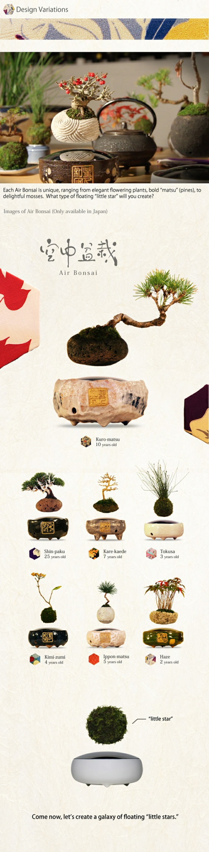 bonsai baum air fliegend japanisches projekt