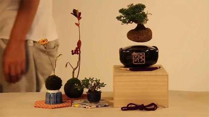 bonsai baum air japanisches projekt