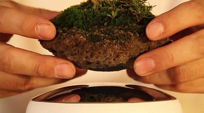 bonsai baum air magnet basis fliegend japan projekt