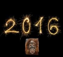 Chinesische Sternzeichen und die Astroprognose für das Jahr 2016