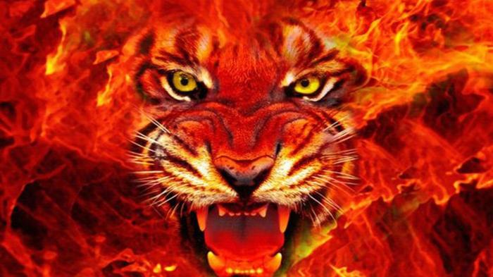 chinesische sternzeichen der feurige affe asia rot chinesisches horoskop tiger close up