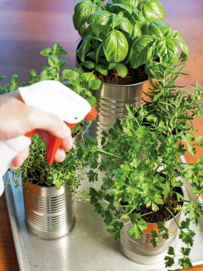 gewürze kaufen kräuter küche kräutergarten anlegen blechdose petersilie koriander thymian estragon
