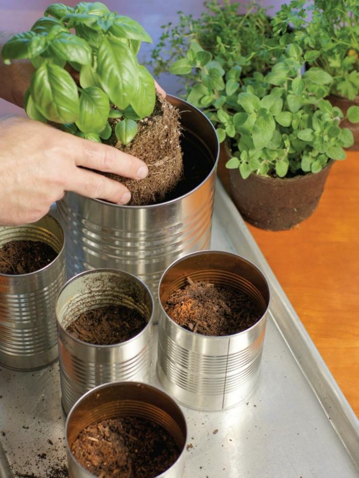 gewürze kaufen kräuter küche kräutergarten anlegen blumenerde blechdose basilikum petersilie