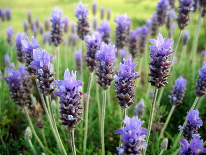 gewürze kaufen kräuter küche kräutergarten anlegen lavendel blüten