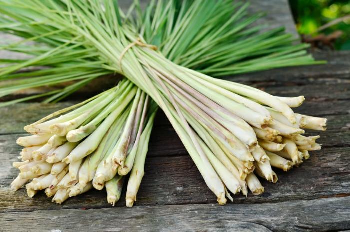 gewürze kaufen kräuter küche kräutergarten anlegen zitronengras gesund