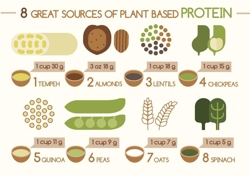 gute Proteinquellen pflanzliches Eiweiß