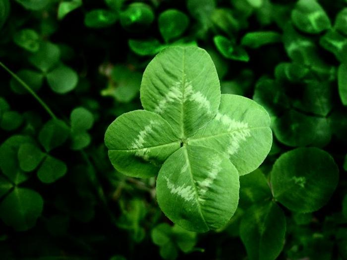 widder horoskop grün vierblättrig glück sternzeichen