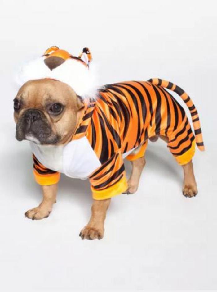 kostüme karnevalskostüme logo  koeln klowns narren kostüme karneval umzug tiger hund