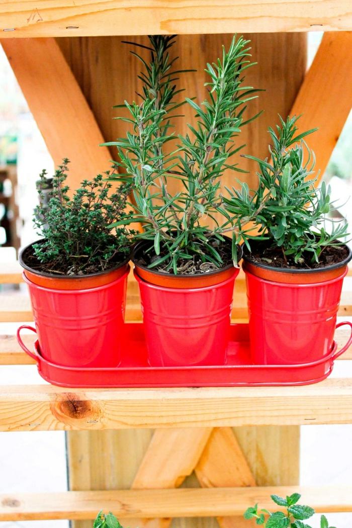 kräutergarten anlegen diy ideen blumentöpfe blechbehälter rot rosmarin thymian