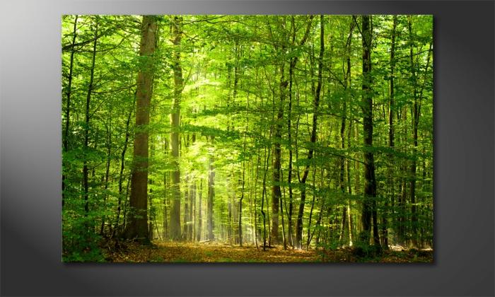 leinwandbilder online bestellen into the forest wandbilderxxl
