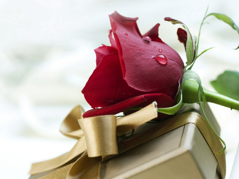 romantische Liebeserklärung Bilder Valentinstag Geschenke rote Rosen