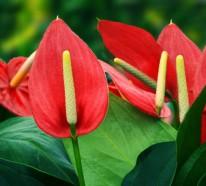Schattenpflanzen für Terrassen, welche nicht sonnig sind: Welche Pflanzen gedeihen dort am besten?