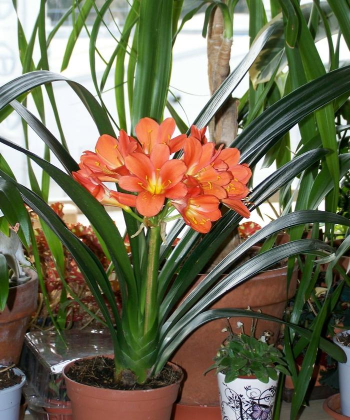 schattenpflanzen klivie blumentopf terrasse gestalten