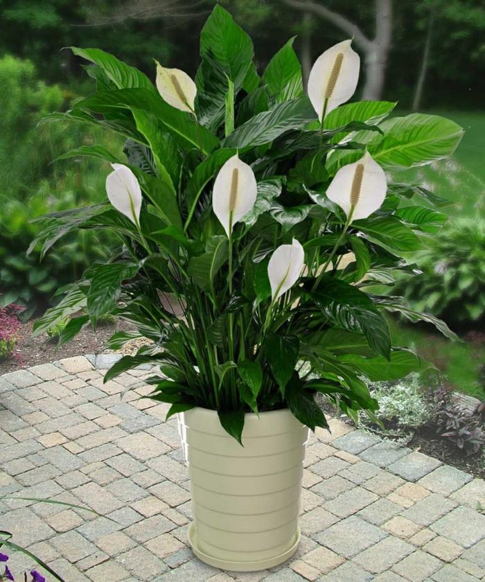 schattenpflanzen terrasse gestalten ideen spathiphyllum