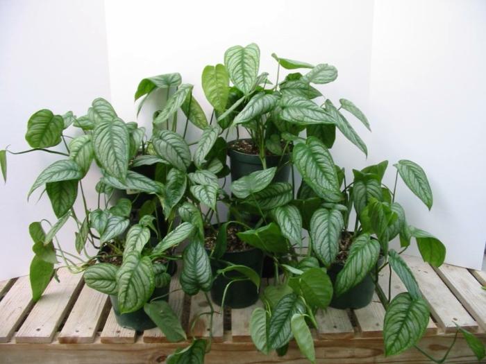 terrassengestaltung ideen dekoideen pflanzen schattenliebend Philodendren