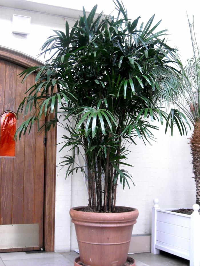 terrassengestaltung terrasse dekorieren schattenpflanzen Rhapis