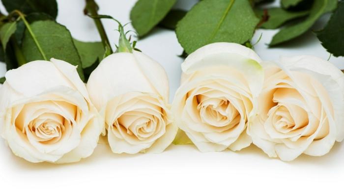 valentinstag ideen weiße rosen verschenken dänemark