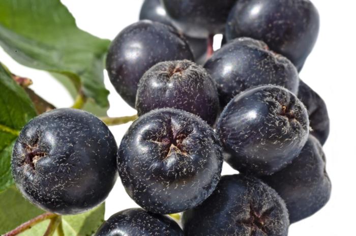 aronia rezepte saft apfelbeeren gesund frucht saft zugvogel nah