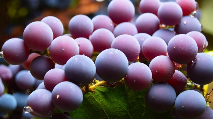 detox kur gesund abnehmen trauben diät mineralien vitamine