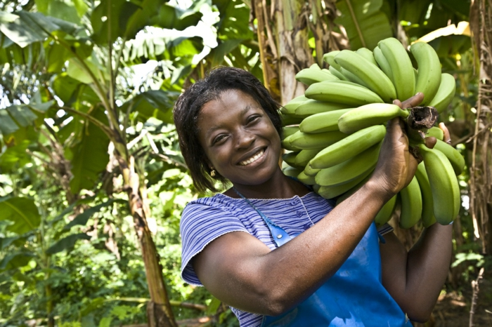 fairtrade produkte einkaufen bananen bio fair zertifiziert