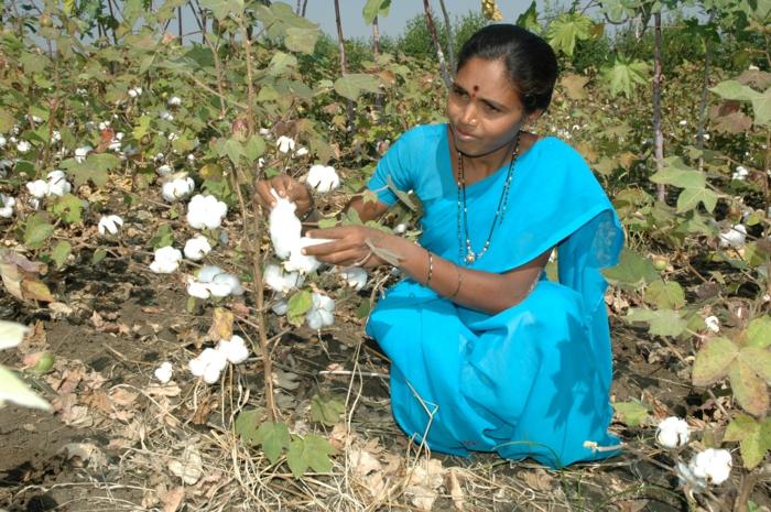 fairtrade produkte einkaufen bio baumwolle indien