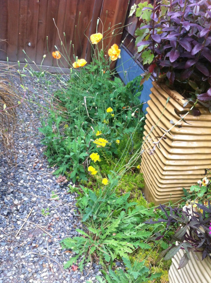 gartengestaltung ideen kieselsteine pflanzen gartenideen