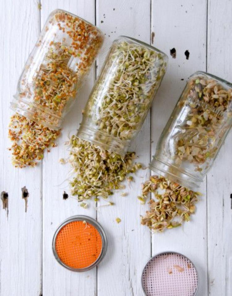 Brokkoli Sprossen Soja Rote Beete Sprossen gesunde Ernährung