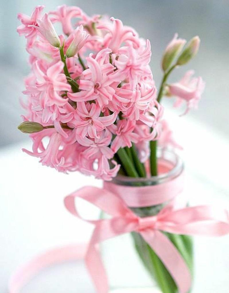 Frühjahrsblumen Blumenstrauß Hyacinthus orientalis schöne Frühlingsblumen Bilder