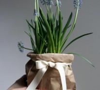 Hyazinthen: Herrliche Frühlingsblumen bringen Stimmung ins Haus