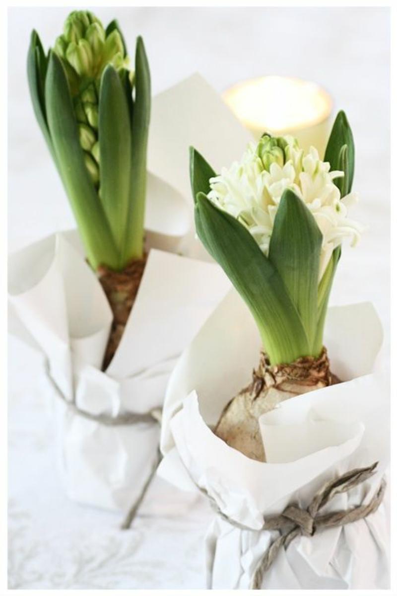 Hyazinthen Deko Ideen mit Frühjahrsblumen Bilder
