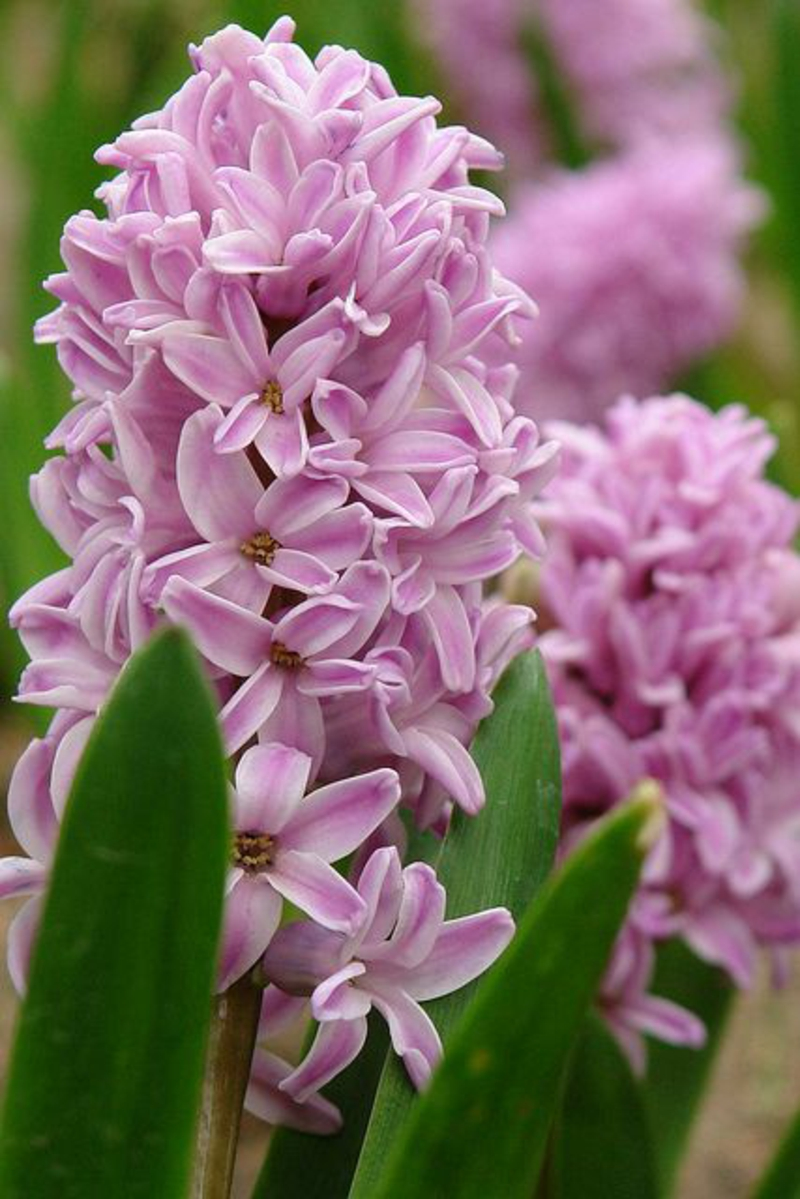 Deko Ideen mit Frühlingsblumen Bilder Frühjahrsblumen