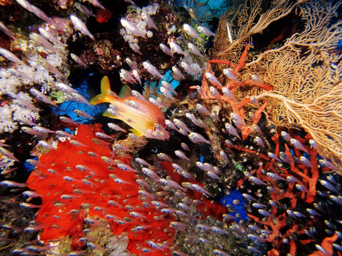 Petra Jordanien Hauptstadt Jordanien Das tote Meer strand urlaub aqaba unterwasserwelt
