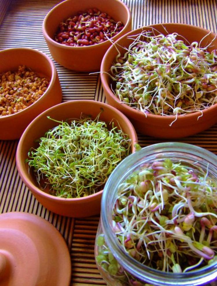 Soja Brokkoli und Rote Beete Sprossen gesunde Ernährung