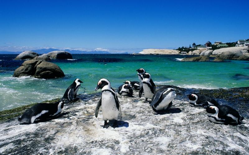 Traumstrände der Welt Boulders Beach Cape Town die schönsten Strände der Welt