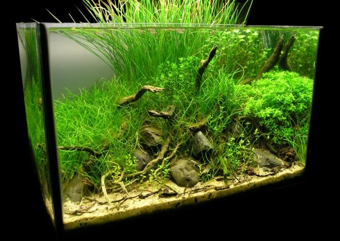 Das Heimische Aquarium Aufpeppen ? Variationen Und Ideen Wasserpflanzen Fur Aquarium Auswahlen Pflege