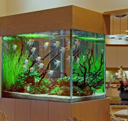 das heimische aquarium aufpeppen variationen und ideen. Black Bedroom Furniture Sets. Home Design Ideas