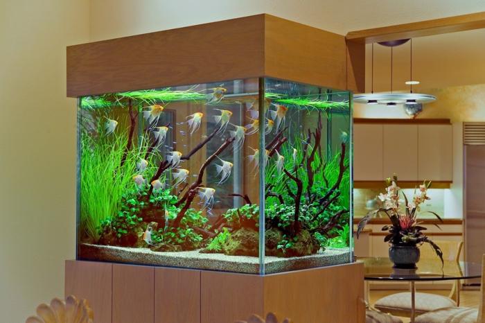 Das heimische aquarium aufpeppen variationen und ideen - Aquarium wohnzimmer ...