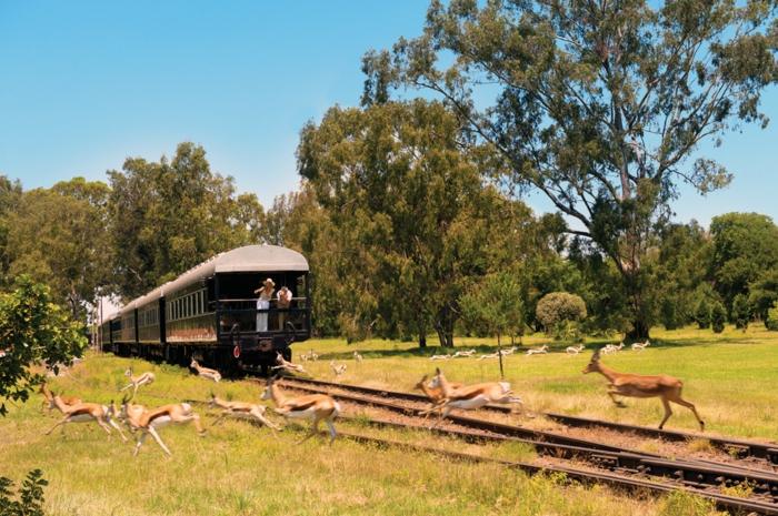 bahnreisen express romantisch afrika rovos rail
