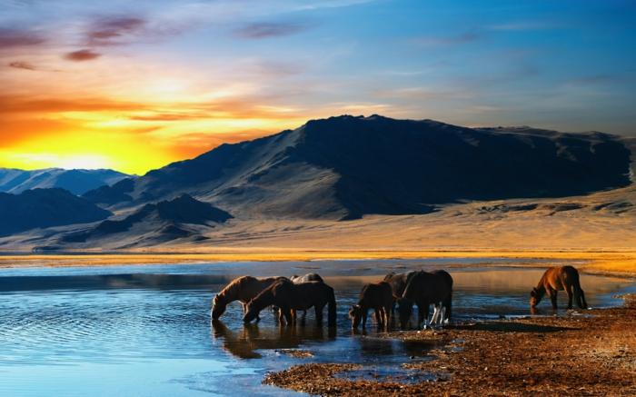 bahnreisen express romantisch reisen steppen mongolei