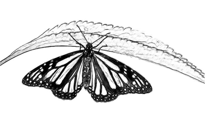 wie kann ich coole zeichnungen mit gew hnlichen vorlagen machen. Black Bedroom Furniture Sets. Home Design Ideas