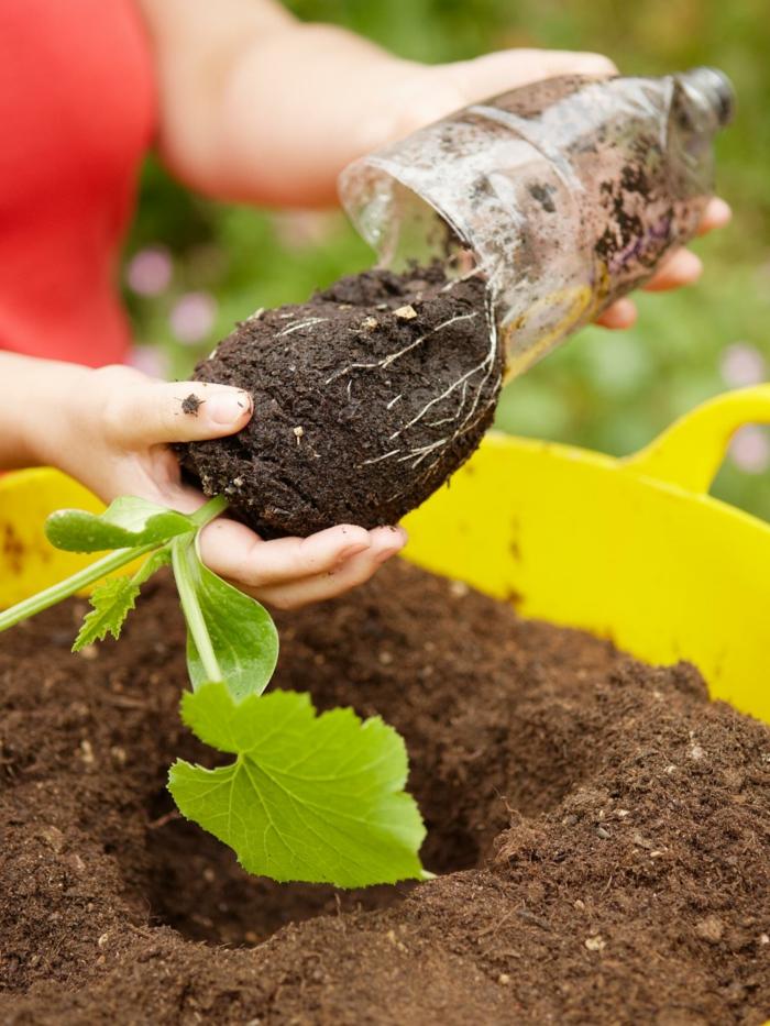 Topfpflanzen Und Die Notwendige Frühlingspflege Gartenarbeit Fruhling Fruhlingsbeginn Tipps