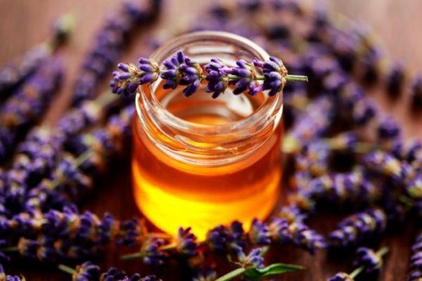 lavendel im topf vermehren lavendel honig