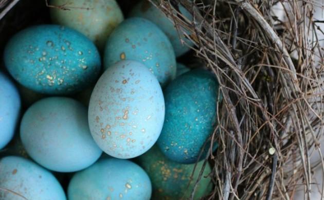 ostereier-gestalten-blau-grün-gold-nest-baumzweige-osterdeko