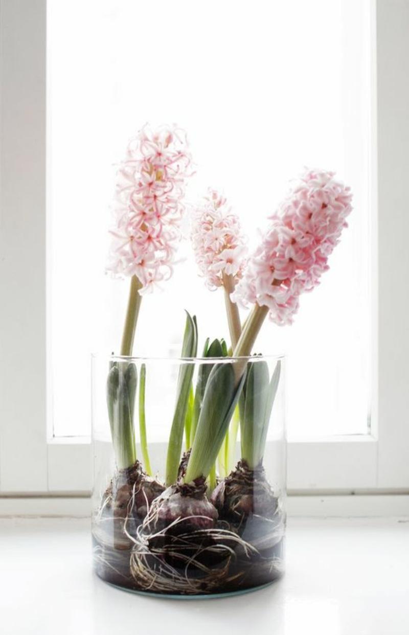 rosa Garten Hyazinthen Hyacinthus orientalis schöne Frühlingsblumen Bilder