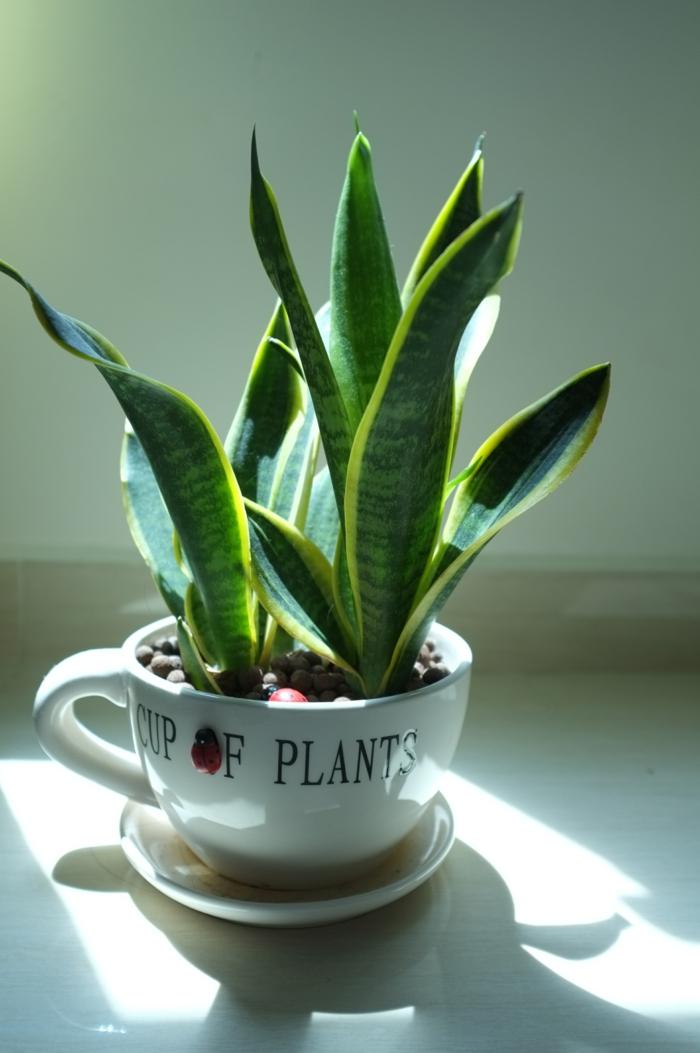 topfpflanzen ausgefallener blumentopf dekoideen