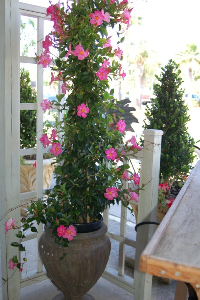 Topfpflanzen und die notwendige fr hlingspflege for Topfpflanzen pflanzen