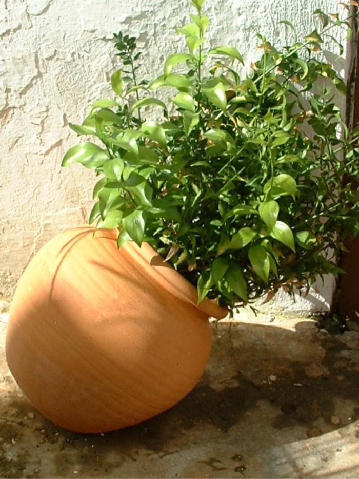 topfpflanzen eleganter blumentopf garten dekoideen